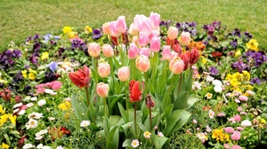 Preview wallpaper daisies, design, flowerbed, flowers, green, tulips
