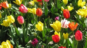 Preview wallpaper bright, flowerbed, flowers, positive, spring, sunny, tulips