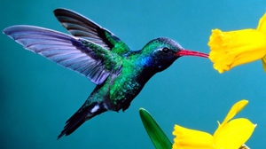 Preview wallpaper background, flowers, hummingbirds
