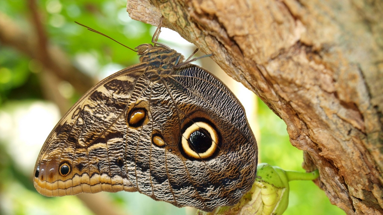 insect wings bark patterns tree butterflies