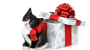 Preview wallpaper box, kitten, spotted