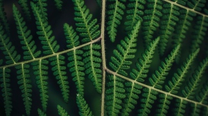 Preview wallpaper carved, fern, leaves, plant