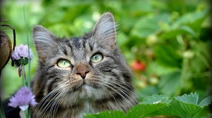 Preview wallpaper cat, face, fluffy, grass, leaves