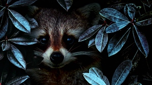 Preview wallpaper disguise, leaves, raccoon