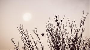 Preview wallpaper birds, branches, minimalism