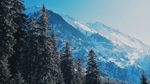 Preview wallpaper mountains, pines, slopes, snowy, trees