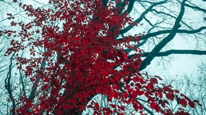 Preview wallpaper leaves, nature, red, tree, trees