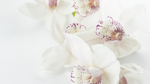 Preview wallpaper buds, flowers, orchids, spots