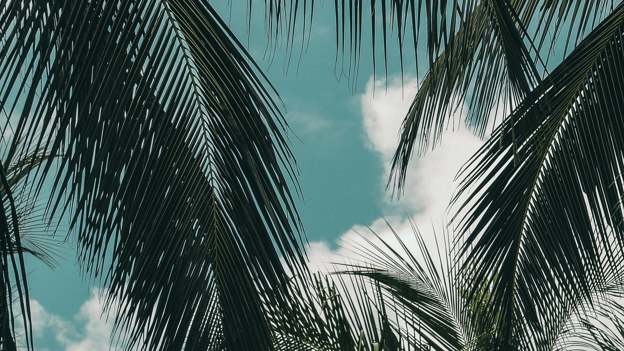 palm tropics branches sky clouds green
