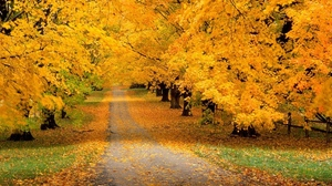 Preview wallpaper autumn, leaves, park, track, trees, yellow