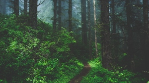 Preview wallpaper fog, forest, grass, path, trees