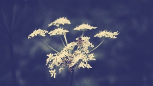 Preview wallpaper bee, branch, flower, plant