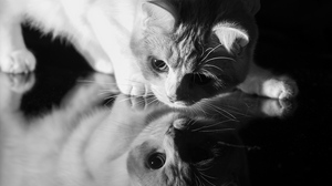 Preview wallpaper black and white, cat, face, glass, reflection, shade