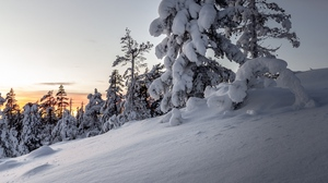 Preview wallpaper drifts, snow, snowy, sunset, trees, winter
