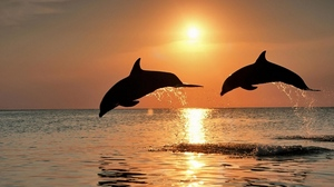 Preview wallpaper couple, dolphins, jump, sea, sunset