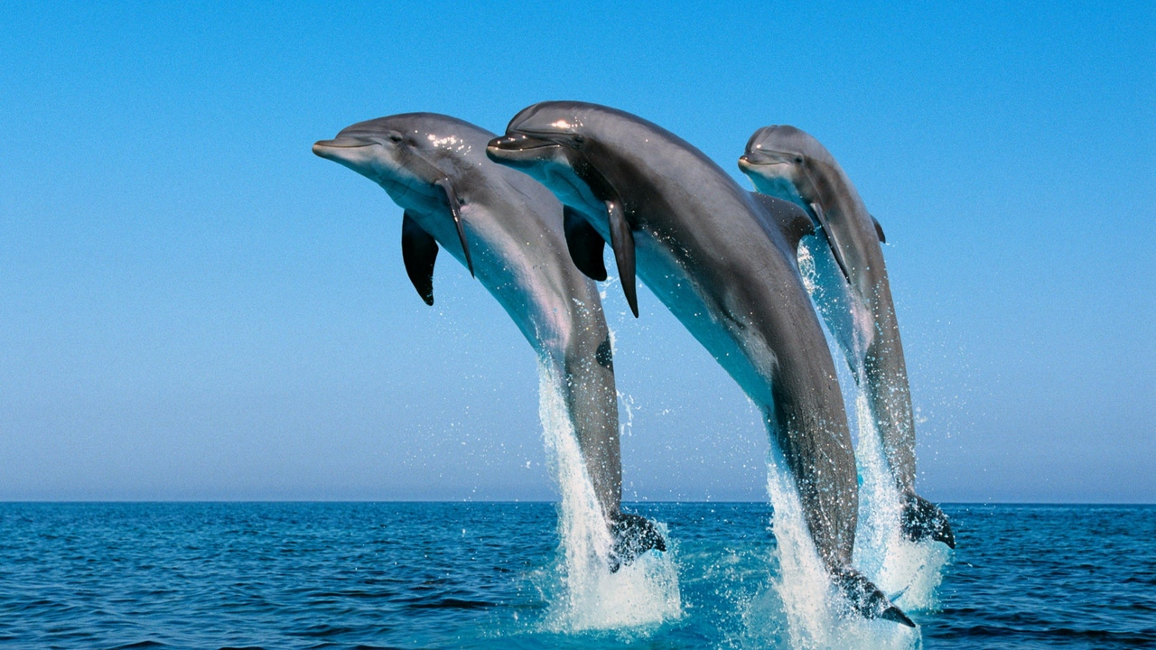 synchronously dolphins spray jump sea water