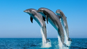 Preview wallpaper dolphins, jump, sea, spray, synchronously, water
