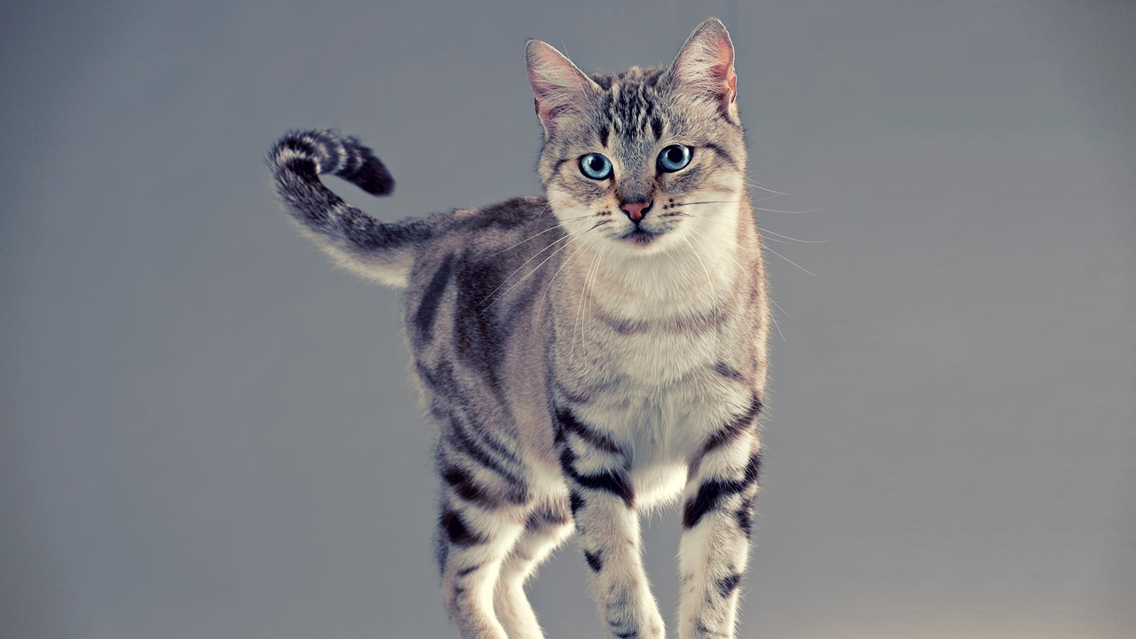 tabby cat stand
