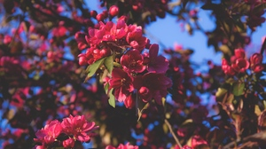 Preview wallpaper branches, flowering, flowers, pink, tree