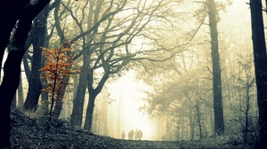 Preview wallpaper autumn, difference, fog, gloomy, leaves, terribly, tree, wood, yellow