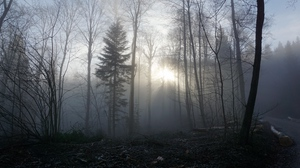 Preview wallpaper fog, forest, trees