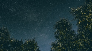 Preview wallpaper night, starry sky, stars, trees