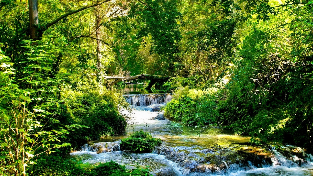 trees wood river streams stream light branches green cascades solarly