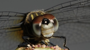 Preview wallpaper eyes, insect, wings