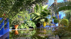 Preview wallpaper branches, palm trees, pond, water lilies, yard
