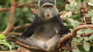 Preview wallpaper africa, funny, monkey, sitting, tree
