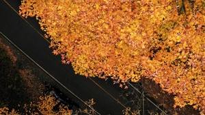 Preview wallpaper aerial view, autumn, road, trees, yellow