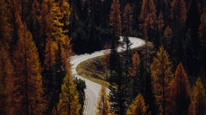 Preview wallpaper aerial view, autumn, forest, road, trees