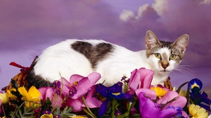 Preview wallpaper cat, flowers, lying, spotted