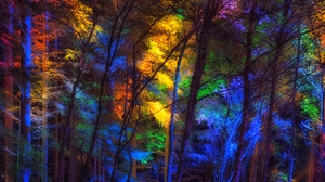 Preview wallpaper colorful, forest, light, trees