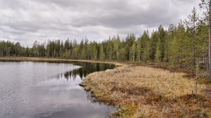 Preview wallpaper autumn, coast, coniferous, faded, gloomy, grass, lake, ripples, sky, wood