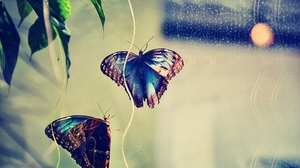 Preview wallpaper background, butterfly, couple, glare, insect