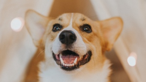 Preview wallpaper animal, cute, dog, glance, pet
