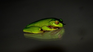 Preview wallpaper dark background, frog, reflection
