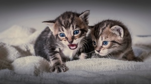 Preview wallpaper cats, couple, fear, kittens