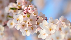 Preview wallpaper bloom, flowers, plants, spring, tree