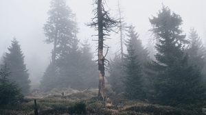 Preview wallpaper dry, fog, nature, tree