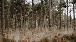 Preview wallpaper conifer, forest, grass, trees, wildlife