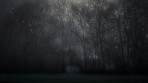 Preview wallpaper fog, forest, mystical, night, starry sky, trees