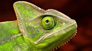 Preview wallpaper eyes, head, iguana, scales