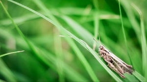 Preview wallpaper grass, grasshopper, insect, sitting