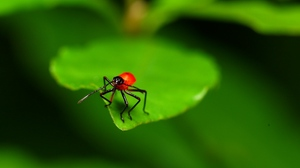 Preview wallpaper close-up, green, insects, leaves, red