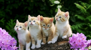 Preview wallpaper flowers, kittens, sit, timber
