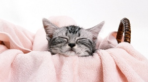 Preview wallpaper face, kitty, lie, towel