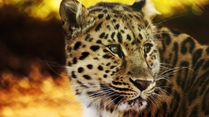 Preview wallpaper big cat, face, leopard, predator, spotted
