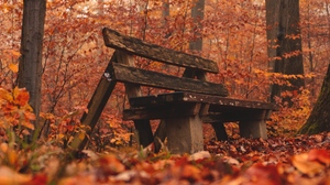 Preview wallpaper autumn, bench, forest, nature